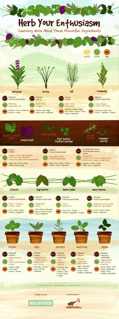 In this post, we show you a chart that lists the most common culinary herbs, their tastes, their food pairings, and even how their growing needs.