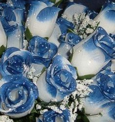 Love the blue tip roses!