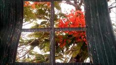 Correspondencia audiovisual. Última asignación del MOOC Artes y Tecnologías para Educar. En este breve vídeo traté de plasmar algunos recuerdos del MOOC, así como una flor típica (Flamboyán) y el cielo de mi bella ciudad.