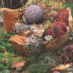 Succulent, Rocks And Accent