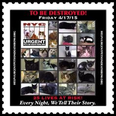 CATS TO BE DESTROYED – 04/17/15