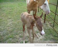 I Forgot How To... Horse! Oh my gosh this is so cute but so sad :(
