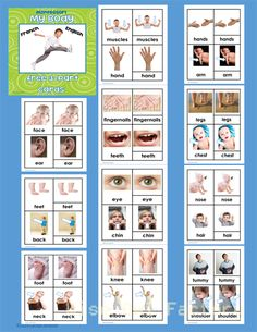 Free My-body-3-part-cards-English-