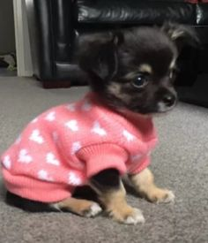 Chihuahua-XS-Knitted-Jumper-Pink-amp-White-Heart-Pet-Dog-Clothes-Christmas-Sweater