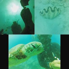 Feeding a turtle and a shot of a giant clam #greatbarrierreef #ocean #turtle #dive #scuba #padi #australia #eastcoast #cairns by sjp2342 http://ift.tt/1UokkV2
