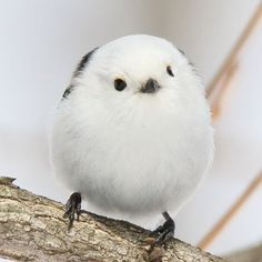 Cut Animals, Cute Baby Animals, Animals And Pets, Funny Animals, Funny Birds, Cute Birds, Beautiful Birds, Animals Beautiful, Budgies