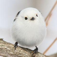 Funny Birds, Cute Birds, Fluffy Animals, Cute Baby Animals, Nature Animals, Animals And Pets, Beautiful Birds, Animals Beautiful, Wild Nature