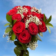Trust us when we say that Long Elegant Dozen Red Roses will catch your eye! GlobalRose specializes in providing divine Dozen Red Roses with Baby's breath in large quantities to show someone that you are thinking of them. 100 Red Roses, Dozen Red Roses, Pink Roses, Million Flowers, Roses Valentines Day, Rose Delivery, Wholesale Roses, Red Rose Bouquet
