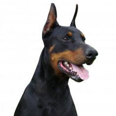 Assicurazione Cane http://www.espertidelrisparmio.it/assicurazione-cane/