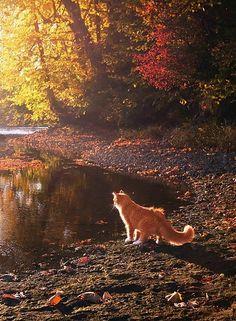 "Cat in Autumn ~ ""Wishful Thinking..."""