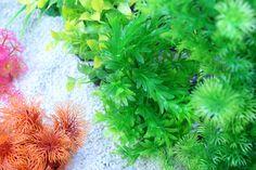 Aquarium Plants and rocks available soon at www.aqua-maniac.com