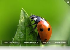 Insect Photography tips    http://www.exposureguide.com/photographing-insects.htm
