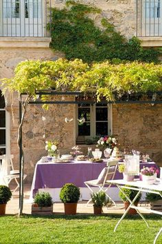soften pergola at fireplace no ,matter what - explore wisteria cultivation in pots