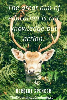 education quote, educational quote, quote, inspiration, parenting inspiration quote