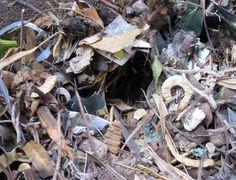 Pack rat nest