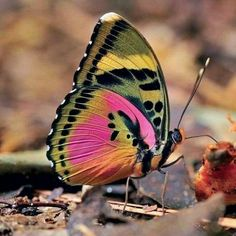 Enjoy and share your fave beautiful butterflies to your own social pages. More views means more profits we can donate to good animal causes: Float Like A Butterfly, Butterfly Kisses, Butterfly Wings, Butterfly Mosaic, Cute Butterfly, Beautiful Bugs, Beautiful Butterflies, Amazing Nature, Beautiful Creatures