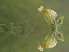 Spiderweb and flower reflection by Ödön Czintos