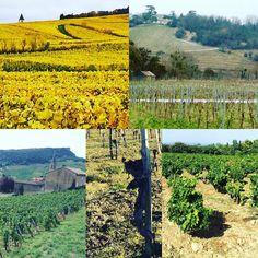 Vineyard of the year  #Bourgogne #burgundy #madiran #fronsac #chateauneufdupape  #vin #dégustation #winelover #Vineyard #winetasting #tasting #wine #vigne #vines  #vignoble #naturalwine  #instawine #viticulture  #winegeek #winelover #vintagewine  #instavinho  #instadrink #instamood #wineblog #winestagram #wein #vino #vinhos