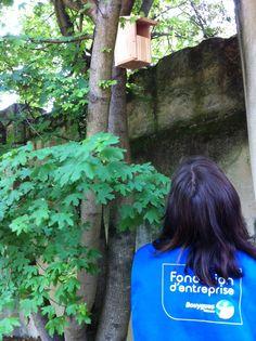 Environnement – Chantier nature. Pose de nichoirs avec la Ligue de Protection des Oiseaux (LPO) à Bordeaux