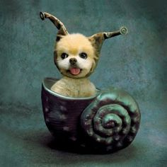 snails, snail puppi, puppies, anim, cutest dogs, pet, ador, winkl, thing