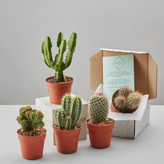 Select from small or large size pots - a mixed surprise of cacti ...