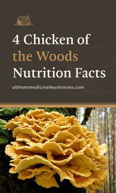 Not only does Chicken of the Woods taste delectable but did you know it's also packed with nutrients and vitamins? Read on to find out why this mushroom is a great vegan alternative to chicken meat.  Discover more about medicinal mushrooms at ultimatemedicinalmushrooms.com #chickenofthewoodsbenefit #chickenofthewoodsrecipe #chickenofthewoodshowtocook #medicinalmushrooms #wildmushrooms Mushroom Guide, Mushroom Recipes, Edible Wild Mushrooms, Stuffed Mushrooms, Food Now, I Love Food, Chicken Of The Woods, Mushroom Benefits, Mushroom Varieties