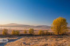 Photograph Misty Wetland Early Autumn Morning by Jivko Nakev on 500px