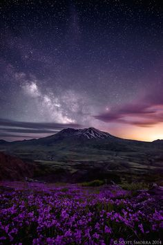 The Milky Way and millions of other stars above Mt St. Helens and a field of summer wildflowers. Mt St. Helens National Volcanic Monument, Washington, June 2013.