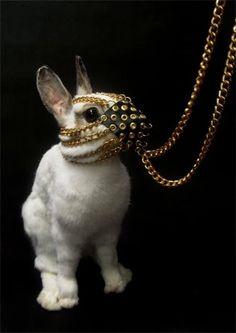 'it's just a little bunny you stupid twat'.... 'oh it looks that way, but he's got big nasty pointy teeth! and noooo don't go there!' aaaaaaaaaah!!! aaaaaaaaaah!!! run away run away!!