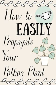 Dear Maia, I have a Pothos plant, but I wish there were more of them! How do I easily propagate my Pothos plant without killing it? Or it's offspring? Pothos In Water, College Trends, Mostly Sunny, Pothos Plant, Propagation, All You Need Is, House Plants, How To Find Out, About Me Blog