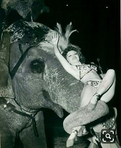 Circus performer with elephant, Vintage Circus Performers, Vintage Circus Photos, Vintage Pictures, Old Circus, Night Circus, Pantomime, Circus Pictures, Ringling Brothers Circus, Art Du Cirque