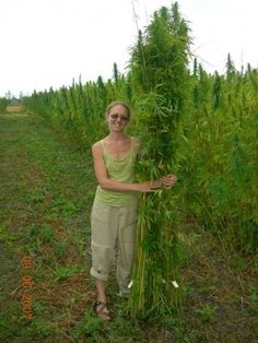 Hemp Field Manitoba