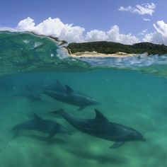 @thomaspeschak : This pod of Indo-Pacific bottlenose dolphins regularly cross international borders. They benefit from the protection of Africa's first trans-frontier marine park connecting Mozambique's Ponta do Ouro marine reserve with South Africa's Maputaland MPA/isimangaliso wetland park Wetland Park, Ocean Activities, Marine Reserves, Bottlenose Dolphin, Animal Magic, Ocean Life, National Geographic, Dolphins, Wildlife