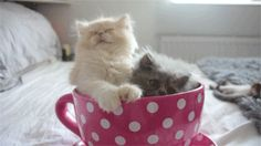Cup of cute.