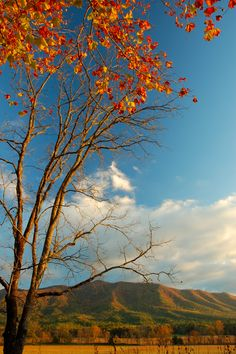 Fall in Cades Cove