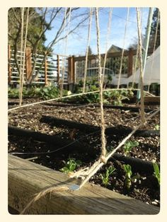 Last year, I fell in love with the bike trellis I built for my beans… Pea Trellis, Seattle, Garden Yard Ideas, Gardening Tips, Outdoor Structures, Leaves, Plants, Writing Tips, Food