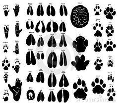 African animal tracks by Karin Van Ijzendoorn, via Dreamstime