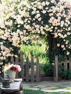 Rose-Covered Arch An old-fashioned rose-covered arch, here with the rambler Dorothy Perkins, looks wonderful in a country garden. The black picket gate looks just right framing the opening to the vegetable garden beyond.