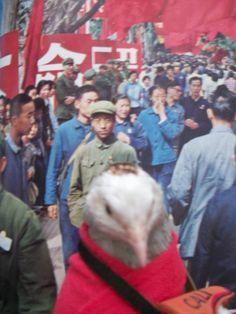 Cutu en Pekin