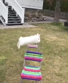 Cute Funny Dogs, Cute Funny Animals, Cute Baby Animals, Funny Bunny Videos, Funny Animal Videos, Rabbit Toys, Pet Rabbit, Cute Baby Bunnies, Funny Bunnies