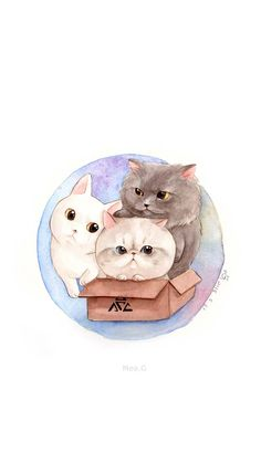 a box of cats~