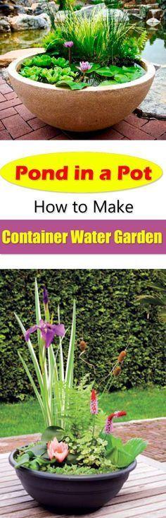 ** Pond in a Pot: Create a Container Water Garden | Balcony Garden Web More