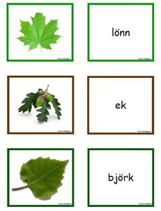 Preschool Science, Science For Kids, Science And Nature, Autumn Activities, Activities To Do, Learn Swedish, Swedish Language, Montessori Classroom, Outdoor Education