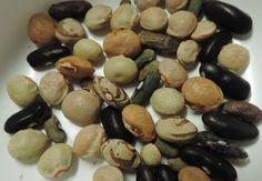 Vous avez récolté les graines de vos légumes du potager, vous en avez beaucoup et vous voulez les conserver?  Rien de plus simple, il suffit de les congeler!  Et si vous avez acheté des graines et qu'il vous en reste encore pour des années, pensez à congeler celles qui restent, dans un sachet ou dans une petite boite genre mascarpone (vide bien sûr!)....