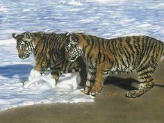 Lesley Harrison | American Wildlife painter