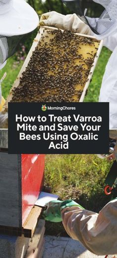Varroa Mites can cause severe damage to your honeybee hive. Fortunately oxalic acid is a Varroa Mite treatment which will not harm your bees. Honey Bee Hives, Honey Bees, Bee Mites, Chicken Tractors, Farm Chicken, Oxalic Acid, Natural Ecosystem, Types Of Animals, Bee Keeping