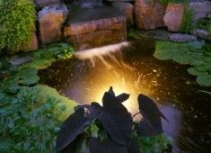 Solar lights tucked into garden beds are a gorgeous way to make your garden come alive at night