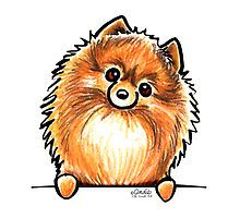 Pomeranian Puppy Sketches | Red Pomeranian Paws Up by offleashart