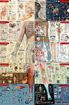 Education Discover Task Shakti - A Earn Get Problem Infografia Cuerpo Humano Taller Mapping Body Anatomy Anatomy Study Human Anatomy Medical Wallpaper Human Body Science Medicine Student Medical Anatomy Medical Art Med Student