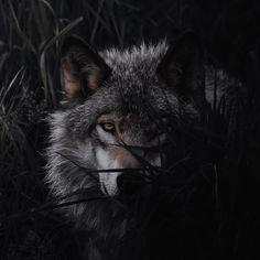 Panther, Fantasy, Dark, Animals, Animales, Animaux, Panthers, Animal, Fantasy Books